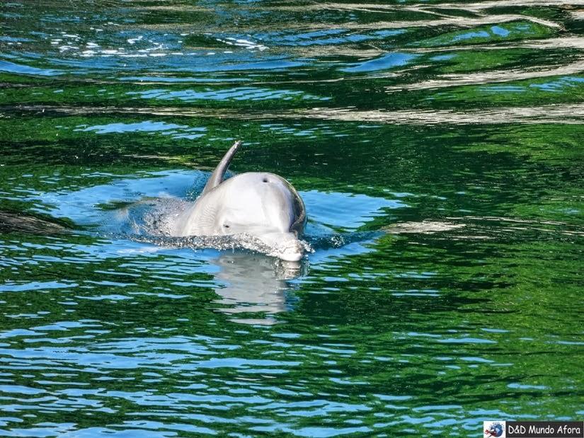 Onde nadar com golfinhos em Cancun