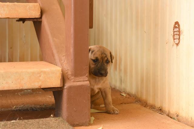 puppy, hiding