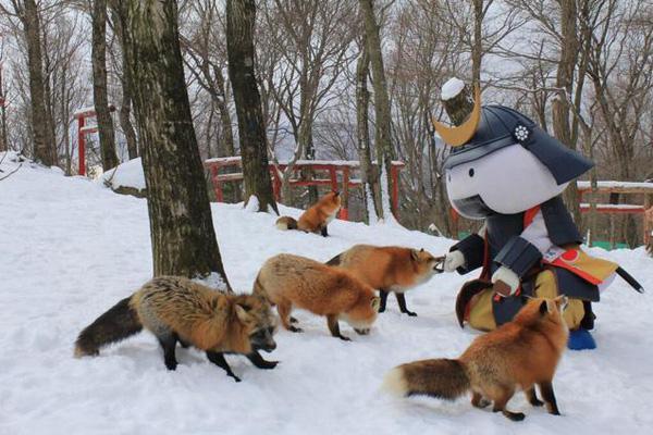 Một vòng ghé thăm thiên đường tuyệt vời của loài cáo tại Nhật Bản