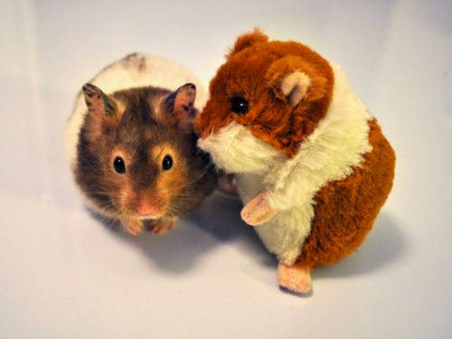 adorable animals with toy versions