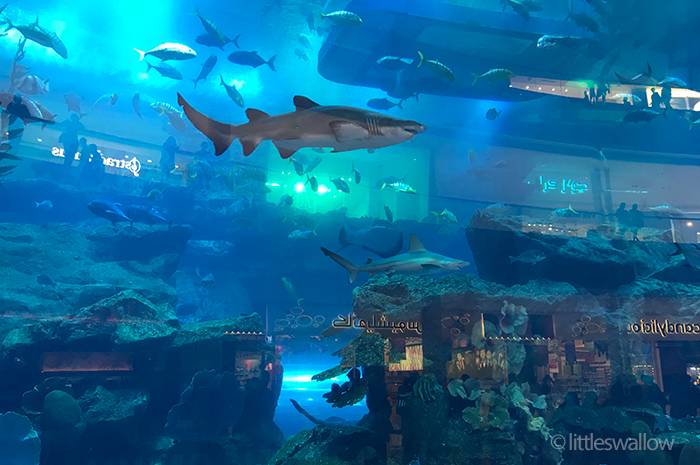 Dubai Mall Aquarium - littleswallow.me