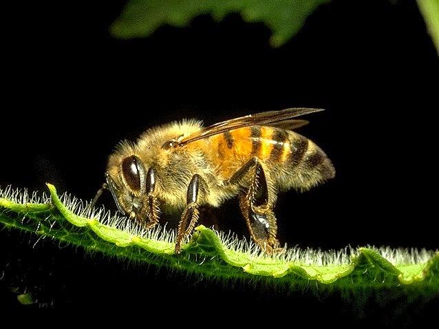 https://bio-orbis.blogspot.com/2014/05/abelhas-o-perigo-da-sua-extincao.html