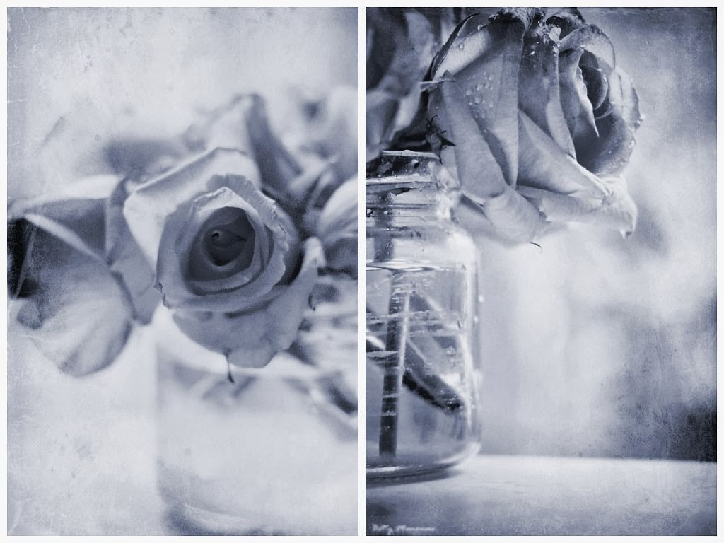 roses in monochrome