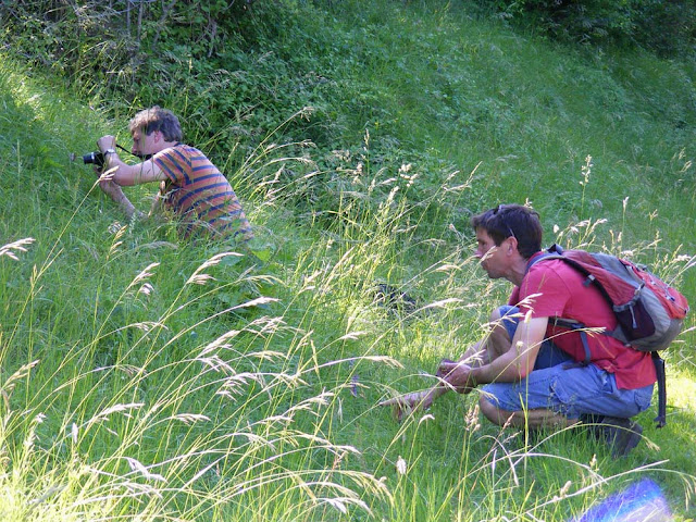 Photographing wild orchids.  Indre et Loire, France. Photographed by Susan Walter. Tour the Loire Valley with a classic car and a private guide.