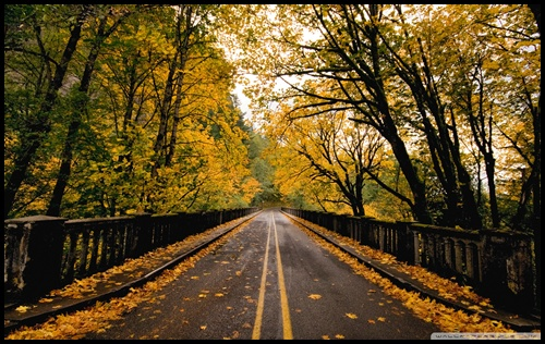 50 Long Road Wallpapers For Desktop And Computers Bored Art Images, Photos, Reviews