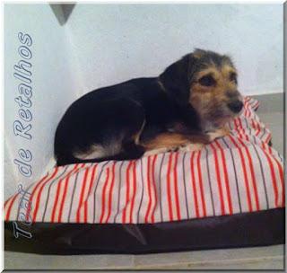 A cachorrinha MEL em seu confortável colchãozinho impermeável