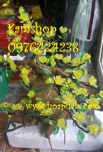 Goc bonsai cay hoa mai o Hoang Dao Thuy