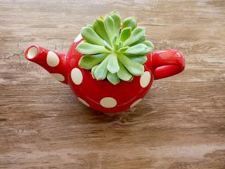 cactus planter in a teapot