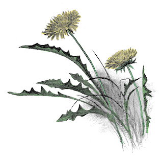 flower image wildflower illustration antique illustration