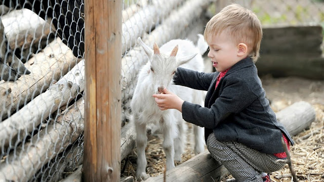 When And Why To Introduce Goat Milk To Your Baby - Which Age Is Suitable?