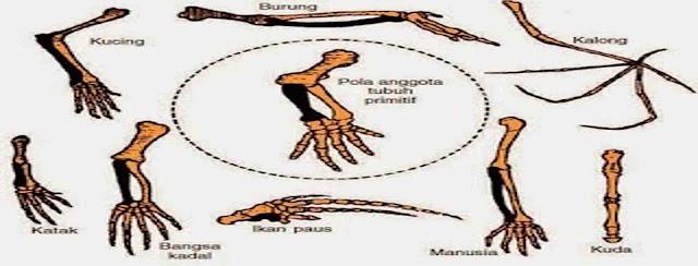 homologi-alat-alat-tubuh-pada-makhluk-hidup