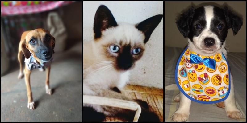 Feira de adoção de cães e gatos oferece mais de 30 animais em Cajobi