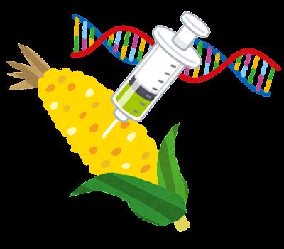 遺伝子組み換え食品のイラスト(とうもろこし)