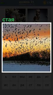 над водой в воздух поднялась большая стая птиц