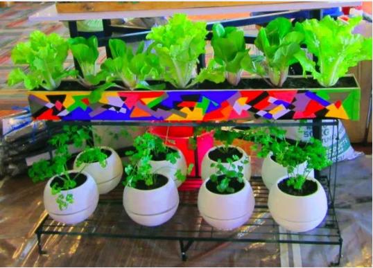 Desain Kebun Sayur Minimalis Di Rumah