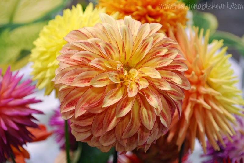2014 Toronto CNE flower show