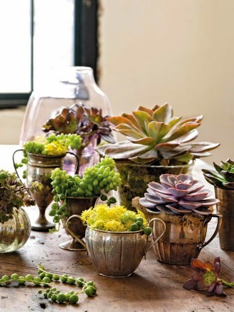 50 i for Indoor plant gift ideas