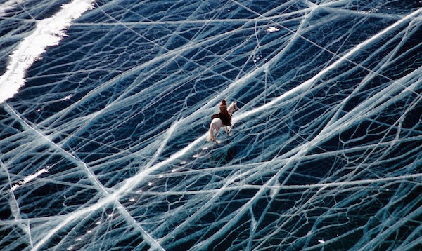 The bravest horse of all time takes on the frozen ocean. - The 30 Most Amazing Photos Of Frozen Things In Honor Of The Coldest Morning Of The 21st Century