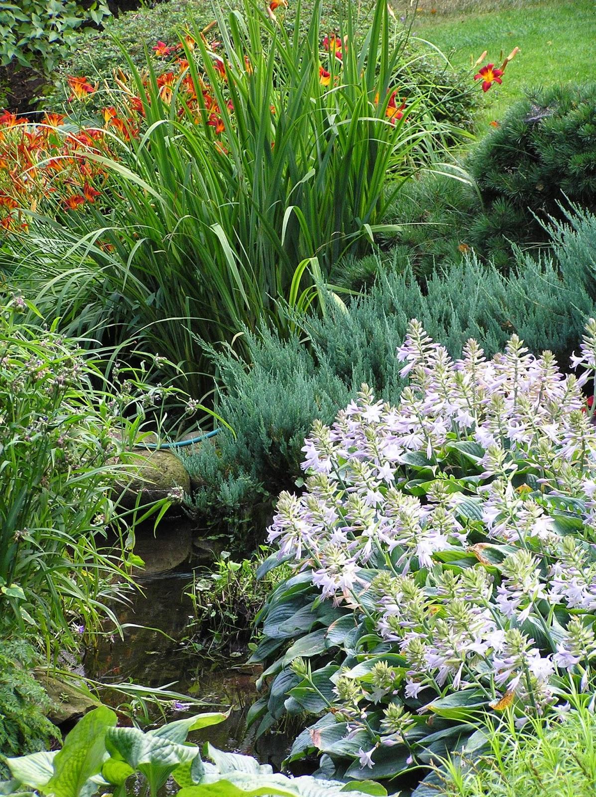 roślinność nad strumieniem