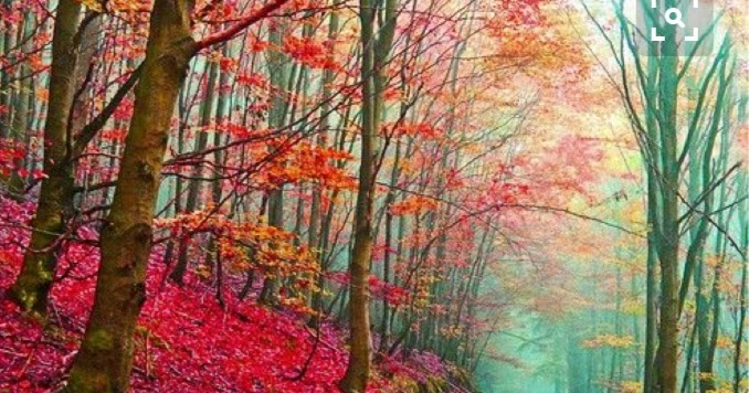 This Colorful Life Colorful Fall Photo