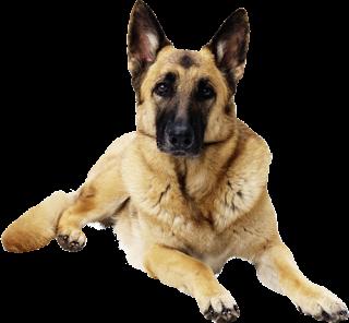 perros,cachorros,pets,mascotas,fondo transparente,png