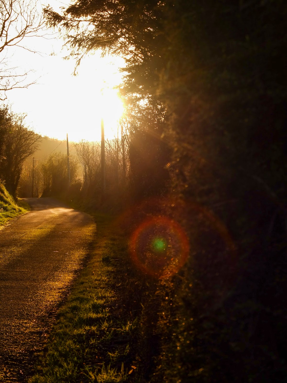 Sun casting a flare on a country side road during golden sunset hour.