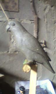 model tanah liat patung burung