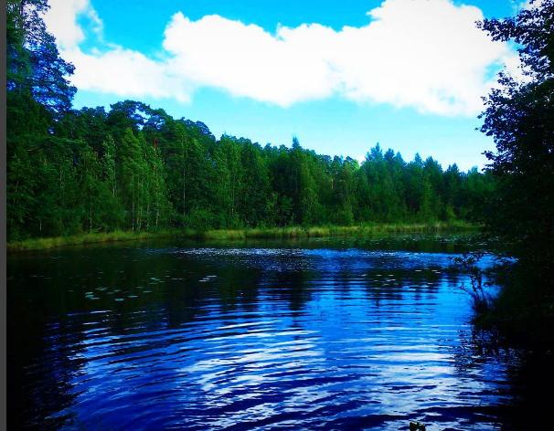 Rosyjskie jeziorko niedaleko Petersburga