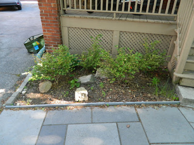 Mount Pleasant East Davisville New Front Shade Garden Before by Paul Jung Gardening Services--a Toronto Gardening Company