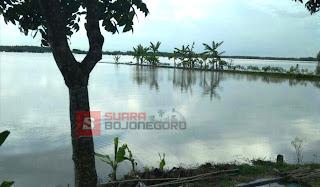 Puluhan Hektar Sawah Terendam Banjir, Petani Terancam Gagal Panen