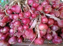 bawang merah obat alami sakit telinga