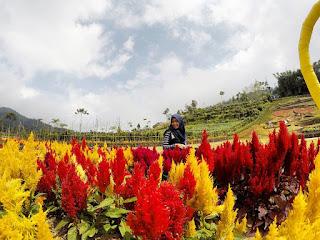 Rute Dan Lokasi Kutabawa Flower Garden Purbalingga