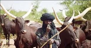 Herdsmen reportedly hold dozens of women captive in Adamawa