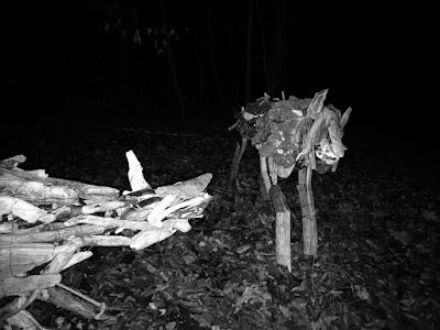 Wölfe am Ammersee Skulpturenweg bei Nacht