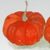 golden nugget pumpkin drawing