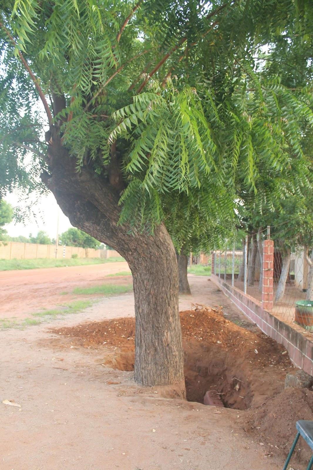 nathan garoua abattage d 39 un arbre. Black Bedroom Furniture Sets. Home Design Ideas