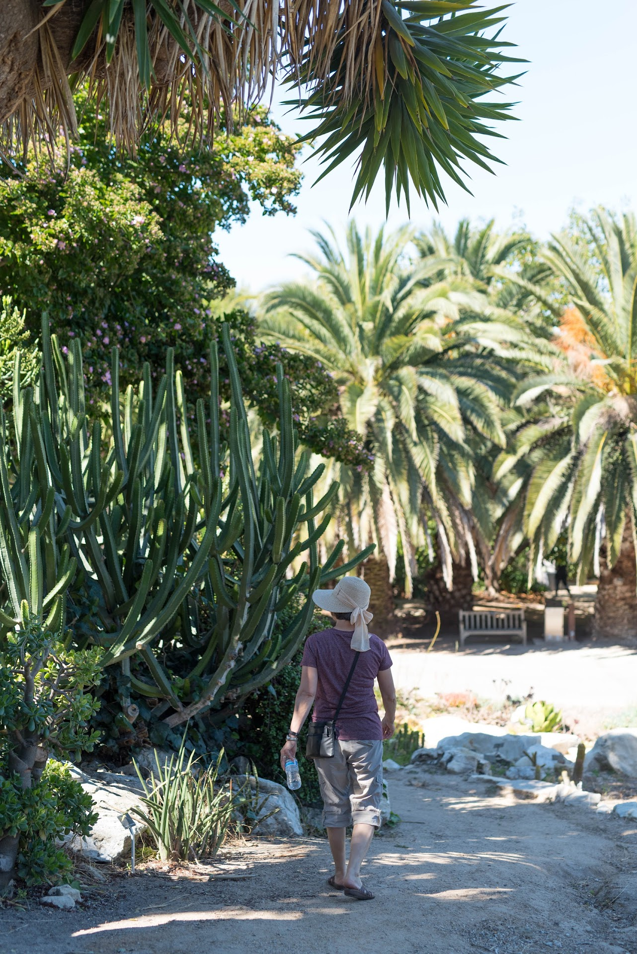 south coast botanic garden, photography, cactus, things to do in socal, torrance,