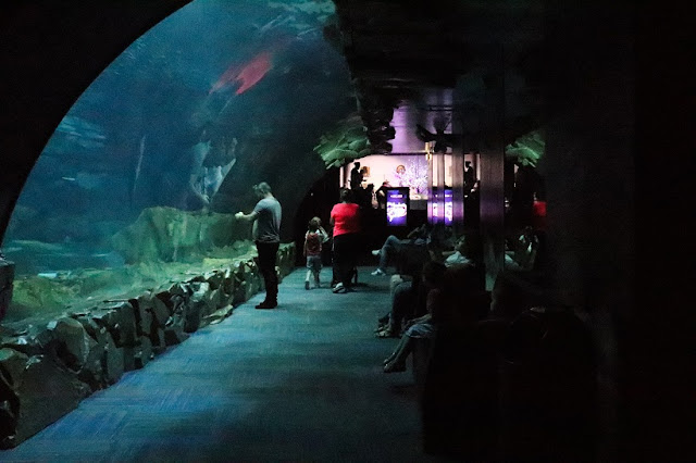 aquarium-paris-requins