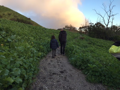 family hike through rainy palos verdes