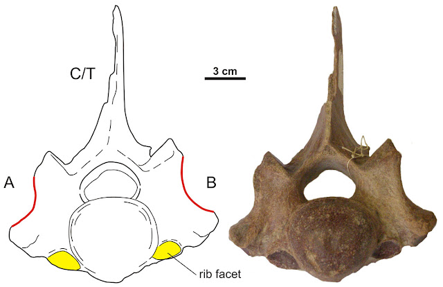 Woolly rhino neck ribs provide clues about their decline and eventual extinction