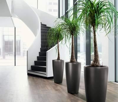 Manfaat Tanaman Hijau untuk Interior Rumah
