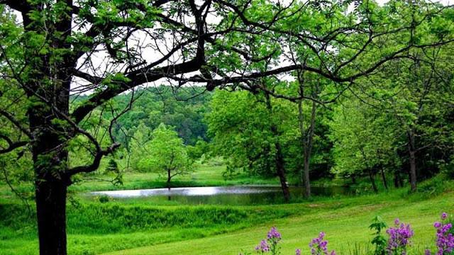 الأشجار و فوائدها البيئية