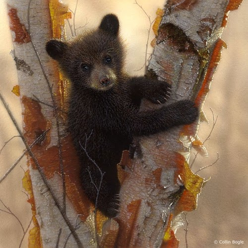 15-Black-Bear-Cubs-1-Collin-Bogle-Animal-Wildlife-in-Art-www-designstack-co