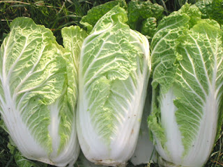 Chinese Cabbage Benefits For Health - 2