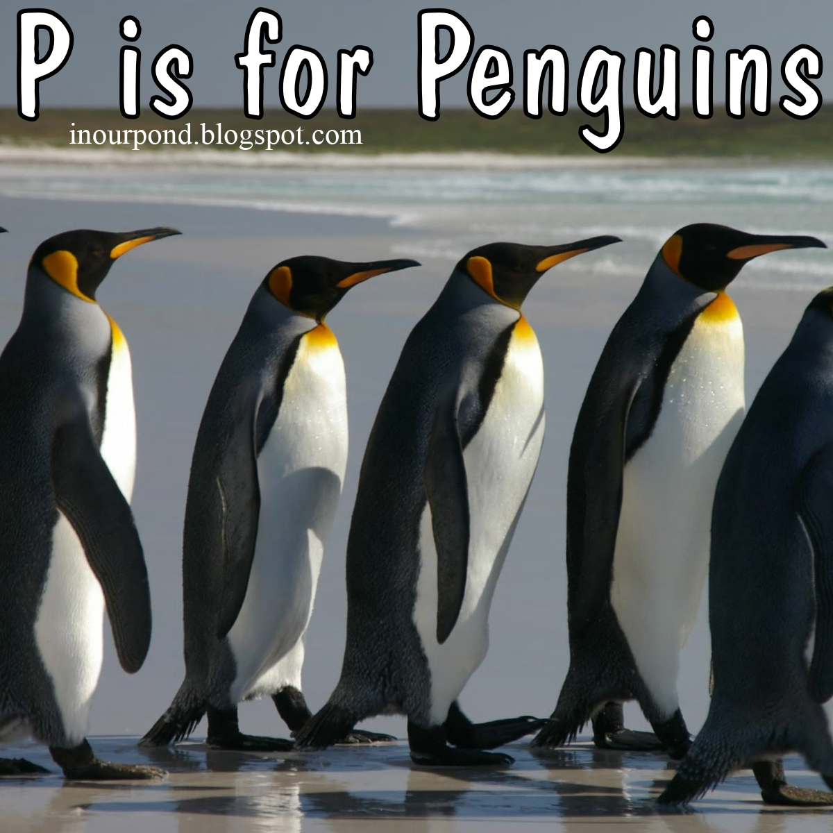 P Is For Penguins