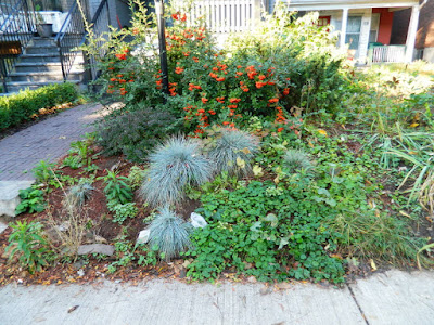 Palmerston Little Italy Front Yard Garden Cleanup before by Paul Jung Gardening Services Toronto