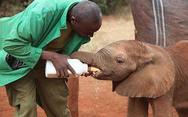 The Nairobi elephant orphanage