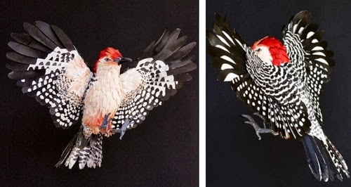 11-Red Belied-Woodpecker-Paper-Bird-Sculptures-Colombian-Artist-Diana-Beltran-Herrera-www-designstack-co