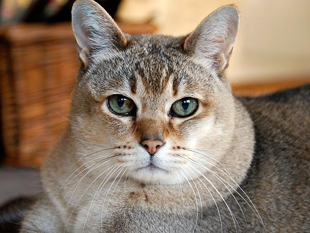 Anda Perlu Tahu Tentang Semua Kucing