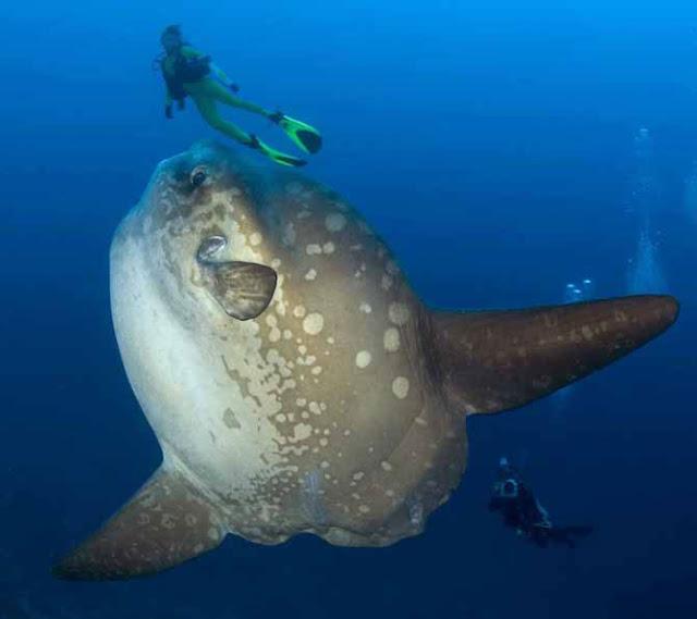 Ψάρια, Ελλάδα, μεγάλα βάθη